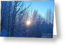 Alaska Sunrise Shining Through Birches And Willows Greeting Card
