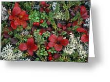 Alaskan Berries 1 Greeting Card