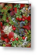 Alaskan Berries 2 Greeting Card
