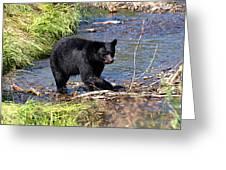 Alaskan Black Bear Hunting In A River Greeting Card