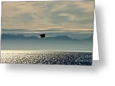 Alaskan Eagle At Sunset Greeting Card