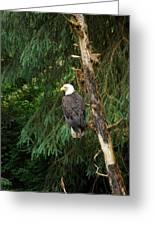 Alaskan Eagle Greeting Card