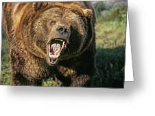 Alaskan Grizzly Greeting Card