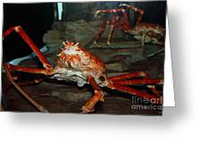 Alaskan King Crab 5d24125 Greeting Card by Wingsdomain Art and Photography