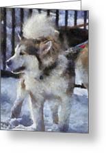 Alaskan Malamute Photo Art 09 Greeting Card