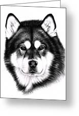 Alaskan Malamute Portrait Greeting Card