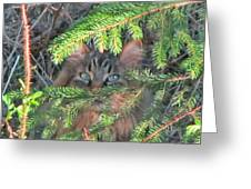 Alaskan Wild Cat Greeting Card
