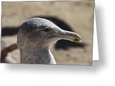 Albatross- Hawaii Greeting Card