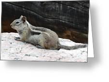 Albert Squirrel Greeting Card