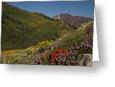 Albion Basin Summer Greeting Card