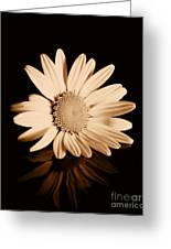 Albumen Daisy Greeting Card