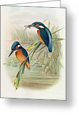 Alcedo Ispida Plate From The Birds Of Great Britain By John Gould Greeting Card
