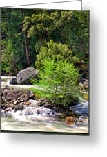 Alder Trees In White Water Greeting Card