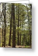 Aldridge Lake Trail Greeting Card