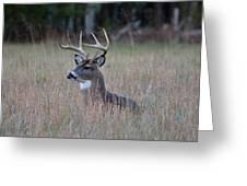 Alert Buck Greeting Card