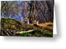 Alert Cute Kit Foxes Greeting Card