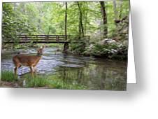 Alert Deer By Bridge In Cades Cove Greeting Card