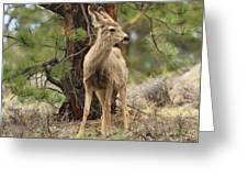 Alert In The Rockies Greeting Card