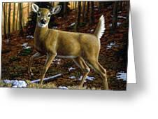 Whitetail Deer - Alerted Greeting Card