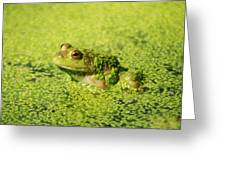 Algae Covered Frog Greeting Card
