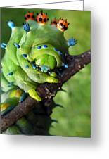 Alien Nature Cecropia Caterpillar Greeting Card