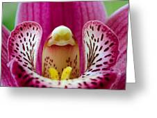 Alien Orchid Greeting Card
