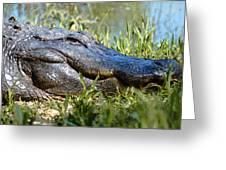 Alligator Smiling Greeting Card