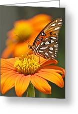 All About Orange 3236 3 Greeting Card
