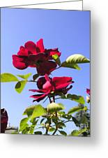 All About Roses And Blue Skies Iv Greeting Card