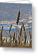 All About Wheat Greeting Card
