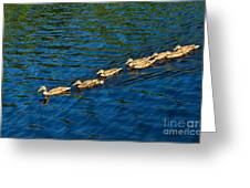 All Ducks Lined Up Greeting Card