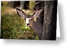 All Ears - Mule Deer Fawn - Casper Mountain - Casper Wyoming Greeting Card