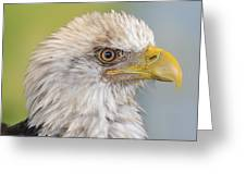 All Feathers And Additude Greeting Card