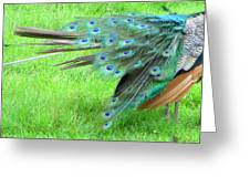All Feathers Greeting Card
