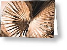 All Points Fern Greeting Card