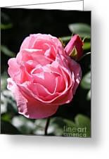 All Shades Of Pink Greeting Card