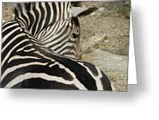 All Stripes Zebra 2 Greeting Card