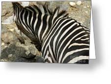 All Stripes Zebra 3 Greeting Card