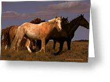 All The Pretty Horses  Greeting Card