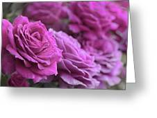 All The Violet Roses Greeting Card