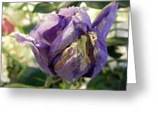 All Things Purple Greeting Card