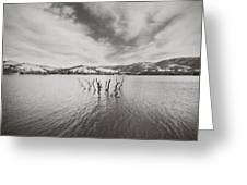 All Together Now Greeting Card by Laurie Search