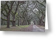 Allee Of Oak Tree's Greeting Card
