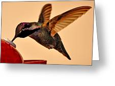 Allen Hummingbird In Flight At Feeder Greeting Card