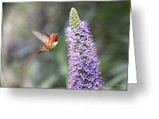 Allen Hummingbird On Flower Greeting Card