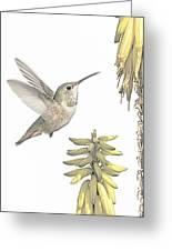 Allen's Hummingbird And Aloe Greeting Card