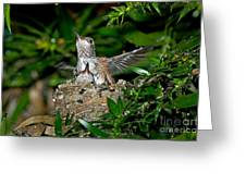 Allens Hummingbird Chicks Greeting Card