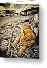 Alley Cat Siesta In Grunge Greeting Card by Meirion Matthias