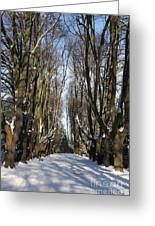 Alley In The Snow Greeting Card