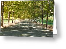 Alley Of Trees On A Summer Day Greeting Card